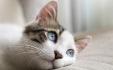あなたの猫もいっているかも? 猫の修行場とは?