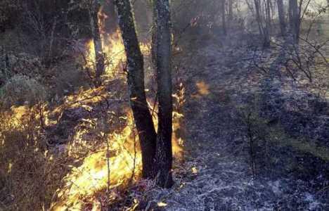 Ell objetivo de es evaluar la recuperación vegetal en ecosistemas forestales afectados por grandes incendios
