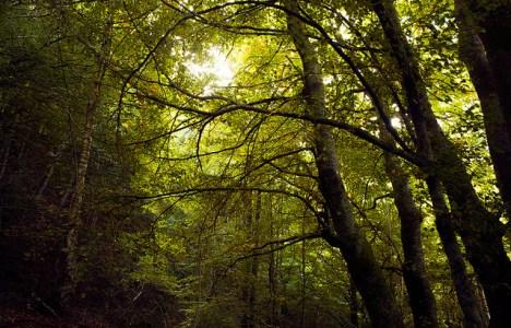 Imagen del bosque del municipio de Barjas (RGB)