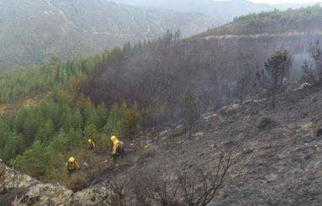 Unidades de la Brif Tabuyo en el incendio en Molinaseca