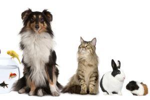 mascotas-chilito-peligros