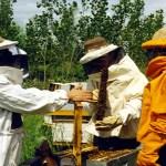 28_apicultores