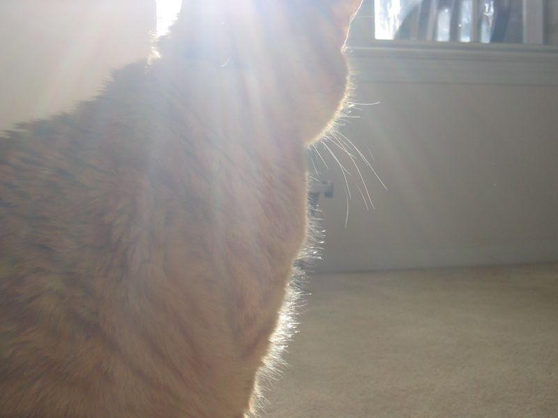 Ebb & sunlight