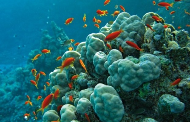 red sea-20101216-160320