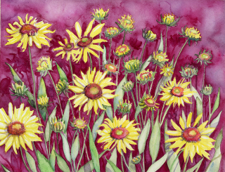 Blanket Flower, Gaillardia, Colorado, Yellow flowers, watercolor painting at the Fraser Art Gallery