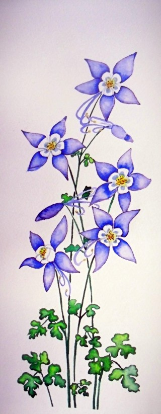 Columbines Colorado wildflower painting watercolor local artist local subject matter Winter Park, Colorado art galleries, Fraser, Colorado Art galleries.