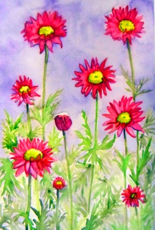 Pink Daisies, Pyrethrum, floral, painting, watercolor, pink, purple
