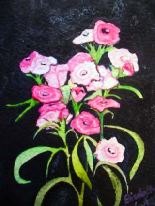 Dianthus Sweet William watercolor painting botanical study floral pink and black garden