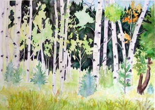 Aspen Plein Air Watercolor painting Experimental Forest St Louis Creek Fraser, Colorado Art Gallery Alpine Art Affair print local artist