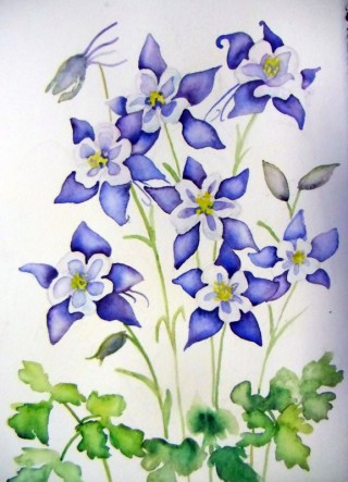 Columbine wildflower Colorado State Flower blue watercolor painting fine art prints commissions originals Fraser Winter Park local art