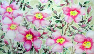 Wild Rose, Colorado Wildflower, watercolor painting, Fraser Colorado
