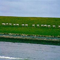 Dithmarschen: Grüne Deiche, weißer Sand, Weite, Watt und Meer