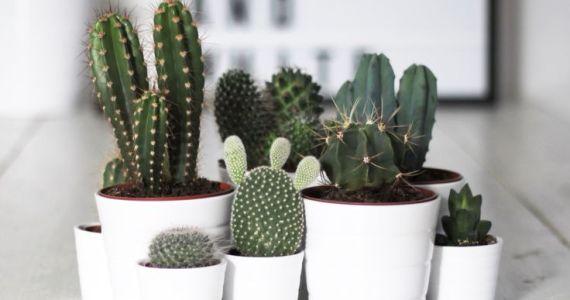 D co ay caramba le folie des cactus ella 39 s diary les petits carnet - Entretenir un cactus ...