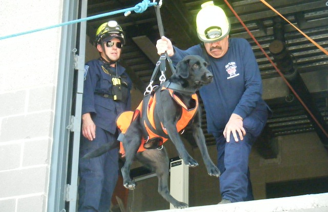 Urban-Search-and-Rescue-Dog-Pilot
