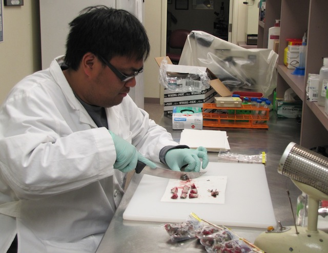 Mark processing samples in the lab.