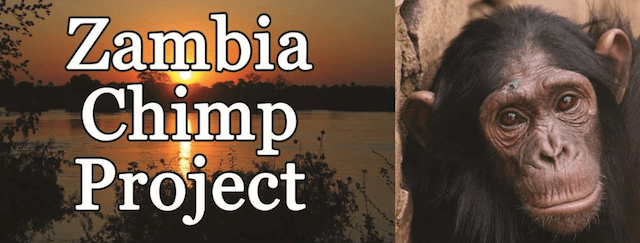 Zambia-Chimp-Project-featured