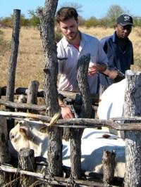 Elliott-Garber-cattle-vaccination-Mozambique-calf-tall