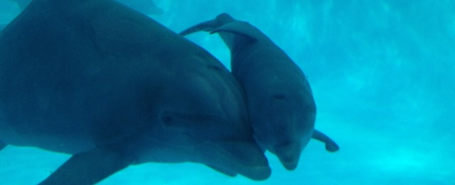dolphin-veterinarian-mother-calf