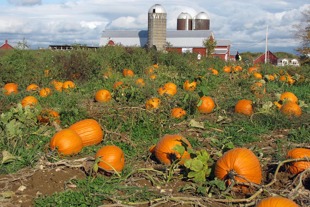 Fall Brithday Wallpaper Pick Your Own Pumpkins At Our Saratoga Farm