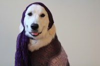 Homemade Dog Costumes For People   www.imgkid.com - The ...