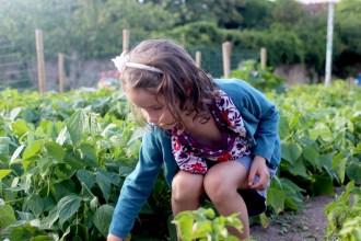 jardin potager bérenice