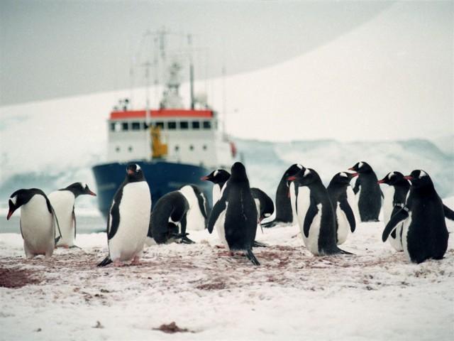 Antartida Vagamundos 2003 pinguinos