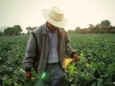 11B1 campo-mexicano-web
