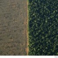 Soon a deal to end deforestation