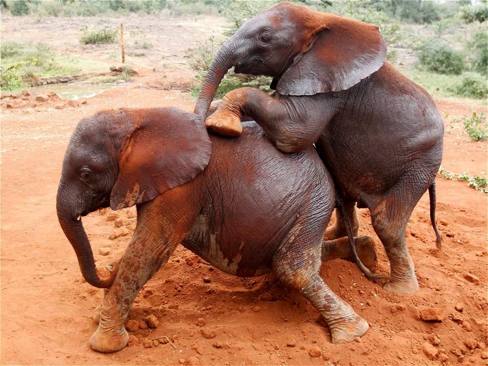 Cute Elephant Design Wallpaper Imagenes De Un Elefante Related Keywords Suggestions For