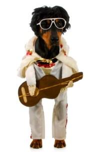 Elvis Presley costumes