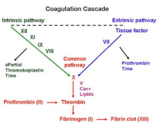 coag-cascade