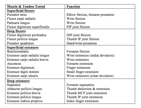Table 1. Muscle and Tendon Function of the Hand and Wrist