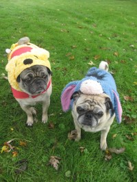 The Pugs' Halloween Costumes From PetSmart | Emily Reviews
