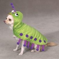 Winning Pet Costumes