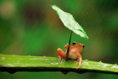 Imagens de Natureza em Fotos