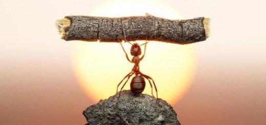 İnanmak ve Başarmak