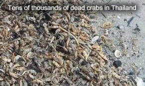 Dead Crabs in Thailand