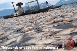 Dead Fish Indonesia