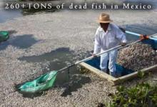 Dead Fish in Jalisco