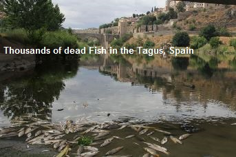 Dead Fish in the Tagus Spain