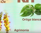 endometriosis-y-antioxidantes