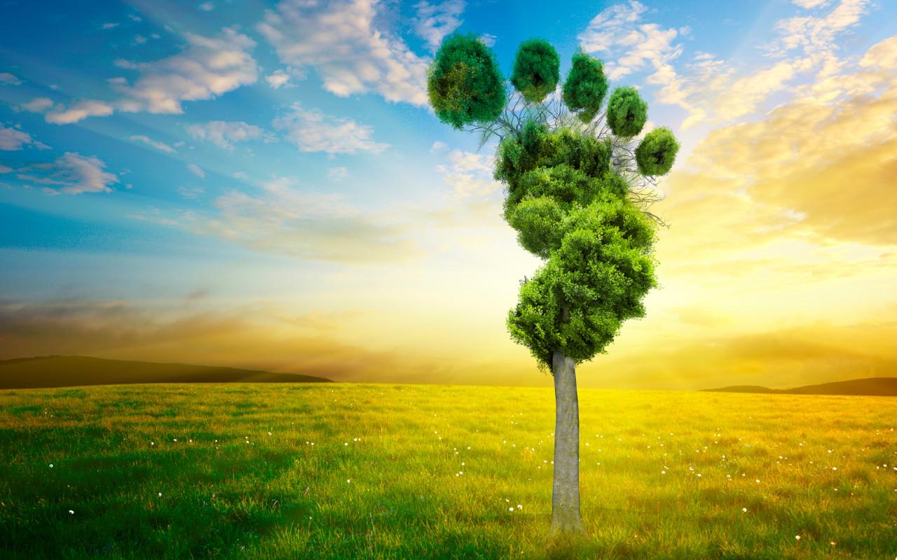 Carbon footprint: la quantità di emissioni di gas ad effetto serra