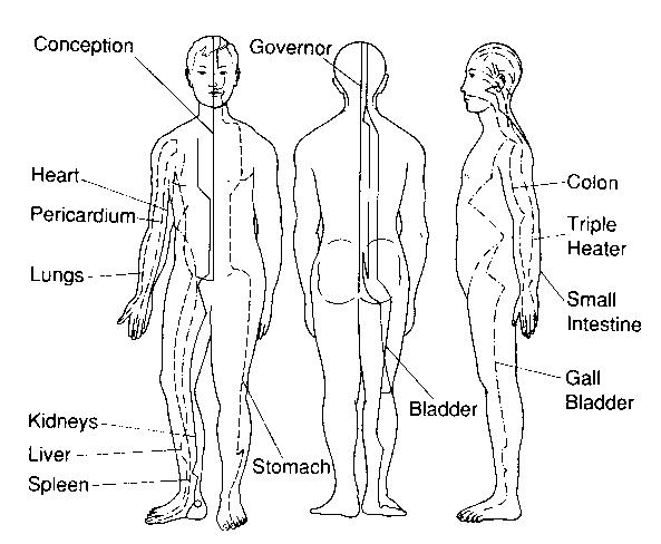 liver and spleen diagram