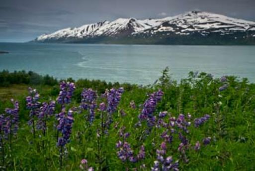 parcours-islande-voyage-famille-circuit-itinéraire-enfant
