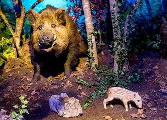 museum-genève-animaux