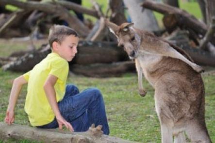 australie-enfant-avec-kangourou portrait