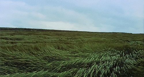 Wind acting on a field of tall grass.