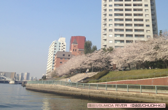 隅田川さくらクルーズ(中央区)