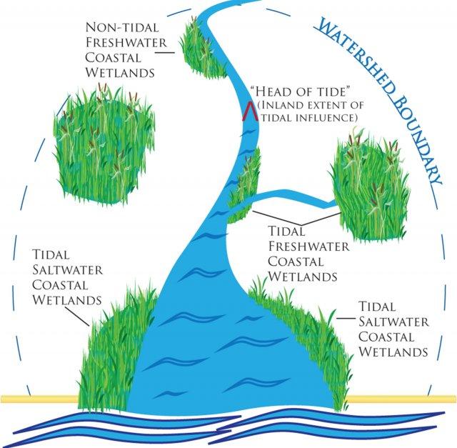 Coastal Wetlands Wetlands Protection and Restoration US EPA