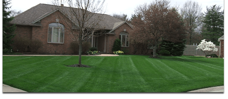 banner-fertilizer-lafayette-indiana-weed-problem